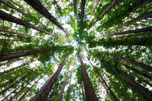 Nature Campers pour la protection de l'environnement.